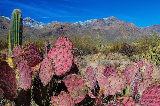 Sabino Canyon visit tuscon travel tips