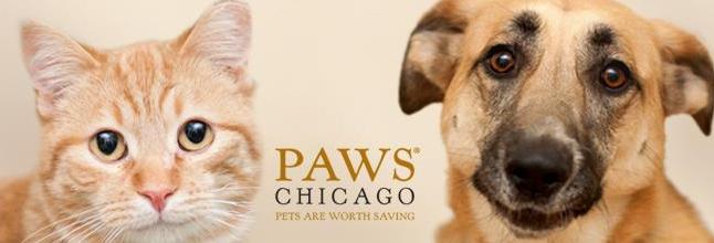 Chicago non-profit
