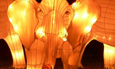 Family Activities In Singapore After Dark